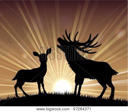 Silhouette a kangaroo and deer