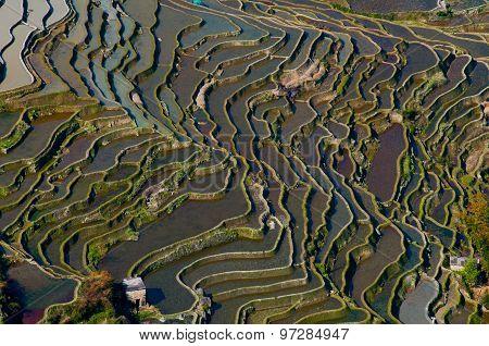 Terraced rice field in water season in YuanYang, China
