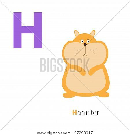Letter H Hamster Zoo Alphabet. English Abc With Animals Education Cards For Kids Isolated White Back