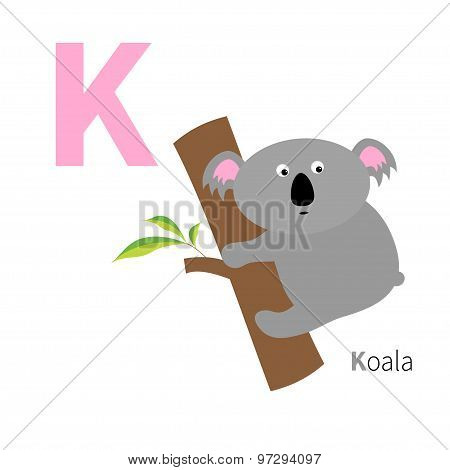 Letter K Koala Zoo Alphabet. English Abc With Animals Education Cards For Kids Isolated White Backgr