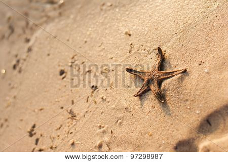 Star Fish On A Sandy Beach