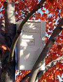 Computer In A Tree