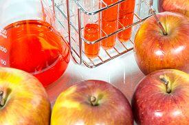 picture of modification  - vegetable test apple Genetic Modification Scientific Experiment - JPG