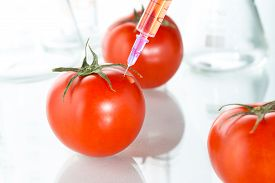 stock photo of modification  - eating genetic modification red tomato laboratory glassware agriculture - JPG