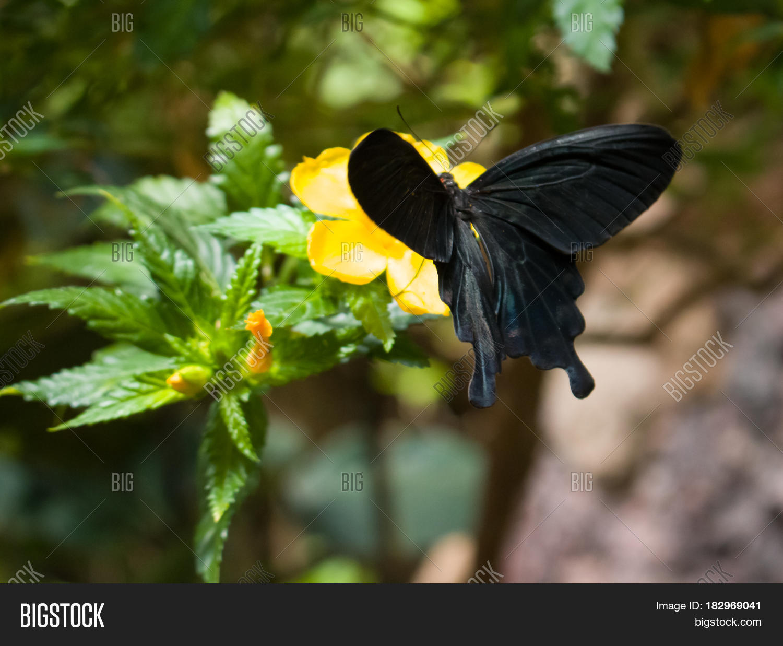 soft focus butterfly on flowers image u0026 photo bigstock