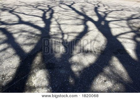 Shadow Of Tree On The Pavement
