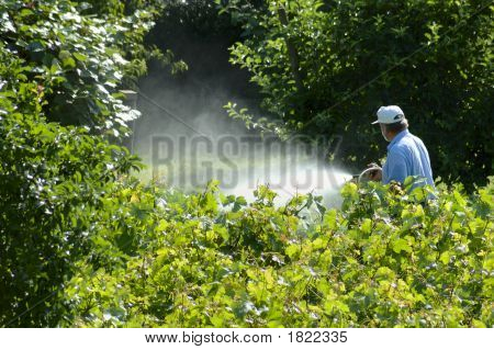 Spraying The Garden