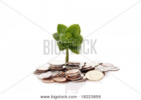 Young tree growing from pile of coins