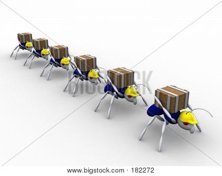 Ameisen Arbeitnehmer