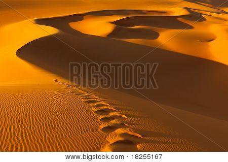 Footprints In The Sand Dunes  - Murzuq Desert, Sahara, Libya