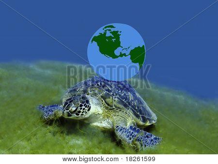 Green Turtle And Globe