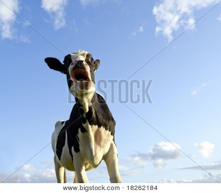 Astonished Looking Cow