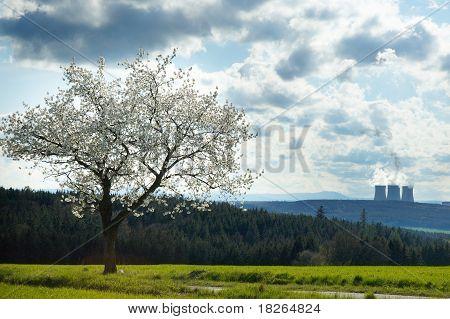 Kirschbaum mit dramatischen Himmel