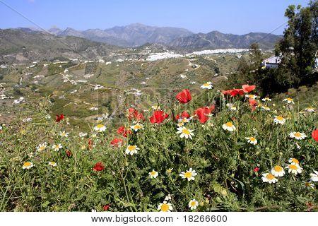 Primavera flores, Frigiliana, Malaga
