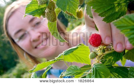 Girl Picking Strawberries