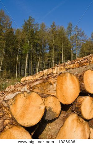 Cut Logs In Front Of Forrest