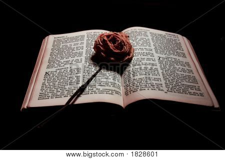 The Rose And The Bible