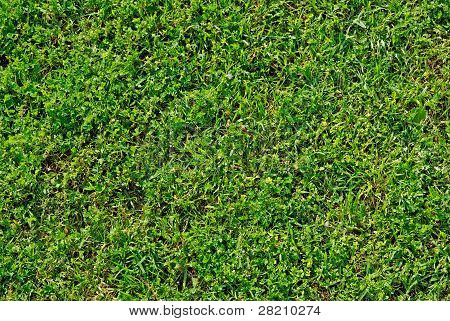Green Summer Lawn. Good As Background Or Backdrop.