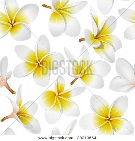 Frangipani (Plumeria) tropical flowers. Seamless pattern background. Vector illustration
