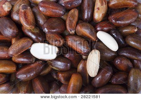 Boiled Elater Iospermum Tapas Blume Seed