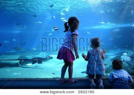 Un día en el acuario