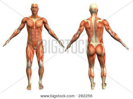 Anatomy Man #4