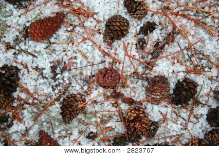 Conifer, Pine Needle And Hail Background