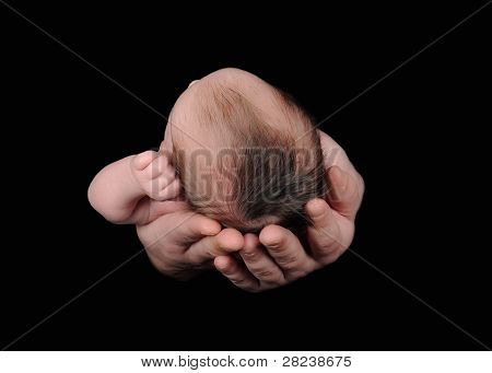 Mans Hands Holding Newborn. Isolated