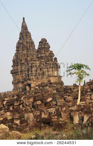 Papaya tree at Hindu temple Prambanan