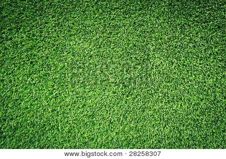 Close Up  Green Grass Texture