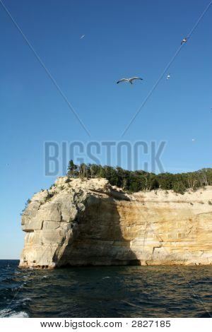 Sea Gulls At Indian Head