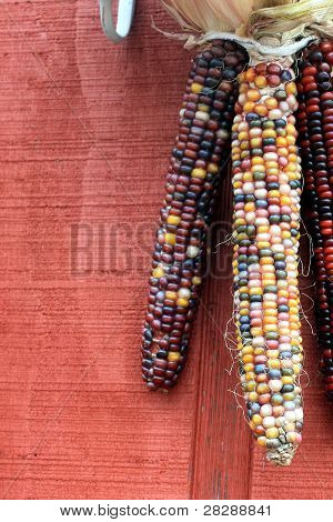 Indian Corn Hanging on a Red Barn