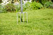 image of aeration  - Garden lawn with a fork stuck in the grass to depict aerating the lawn - JPG