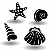Black Sea Shells Icon Set, Collection Of Seashell, Clam, Nautilus Snail, Spiral Shell And Starfish.  poster