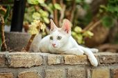 White Stray Cat Resting On Pavement Curb Made Of Bricks, Garden Trees And Leaves In Background. poster