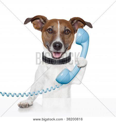 Cão sobre o telefone falando