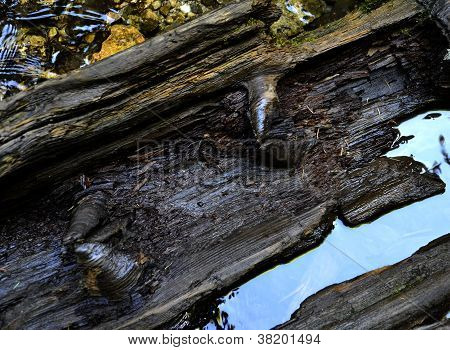 Disintegrated Wood