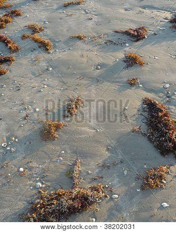 seaweed, sand, and seashells