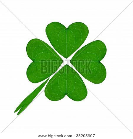 Green Four Leaf Clover On A White Background