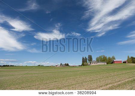 Farmland On Early Summer