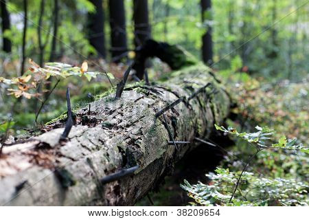 Old Treetrunk Decomposing