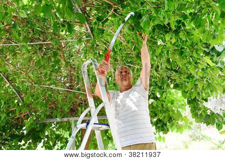 Elderly Man Cuts A Tree Branch