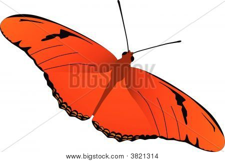Julia Butterfly Vector