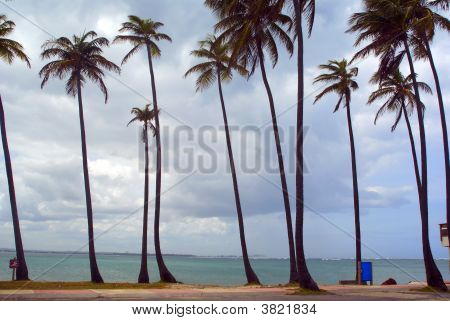 Palm Trees On A Tropical Beach In Puerto Rico
