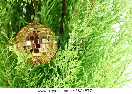 Golden Ball  And Firtree