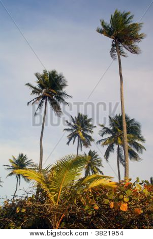 Tropical Palm Grove On A Carribean Island