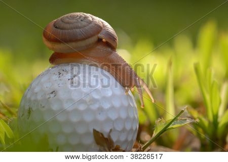 Snail On A  Golf Ball.