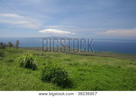 Maui Upcountry Landscape