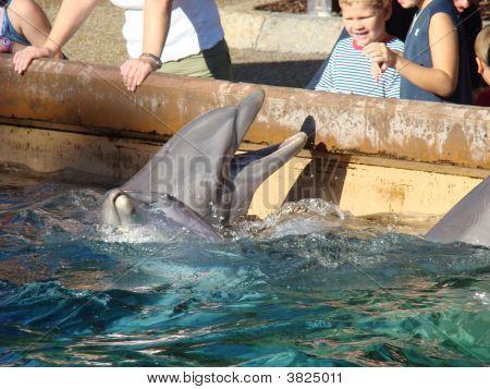 Feeding The Dolphins