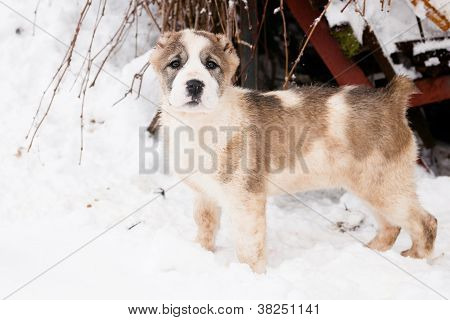 Standing Puppy